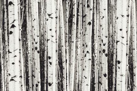 Grey Birch Trees Contemporary Photorealistic Mosaic by Artaic