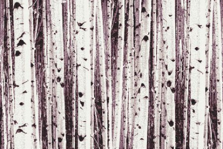 Purple Birch Trees Contemporary Photorealistic Mosaic by Artaic