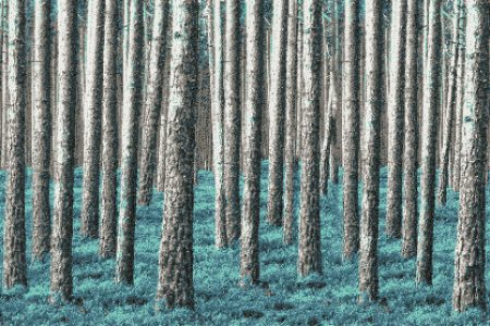 Turquoise Evergreen Forest Contemporary Photorealistic Mosaic by Artaic