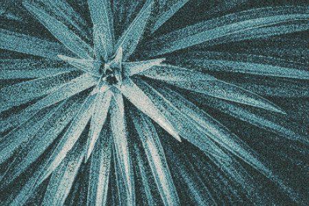 Blue spider mums Modern Floral Mosaic by Artaic