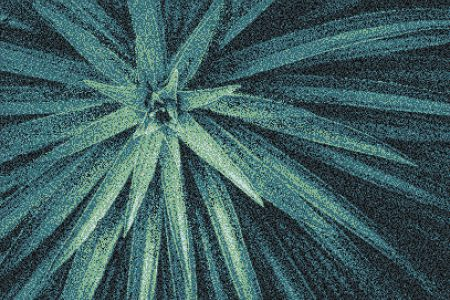 Green spider mums Modern Floral Mosaic by Artaic